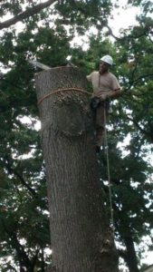 best tree service sussex nj