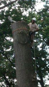 best tree service sussex nj