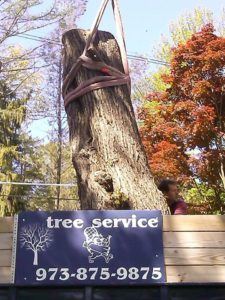 lodema tree service Mountain Lakes