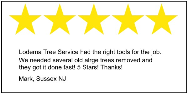 Sussex NJ tree service review Lower Montville New Jersey