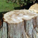 stump icon Newfoundland New Jersey