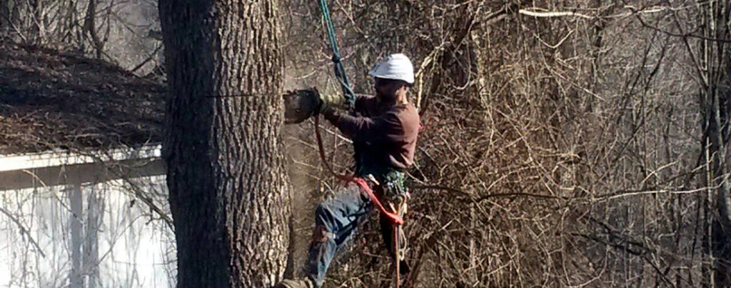 tree cutter removing a tree in Mountain Lakes NJ