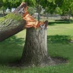 tree removal icon Oak Ridge