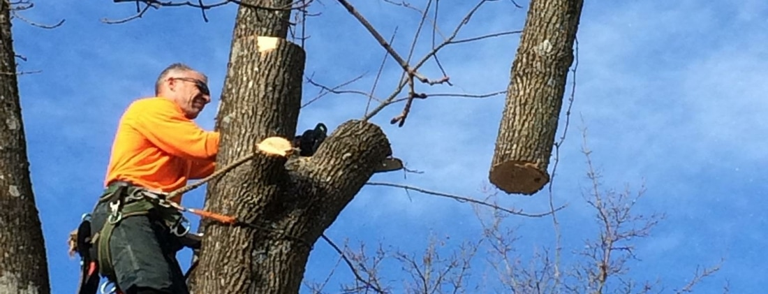 tree removal Fredon New Jersey