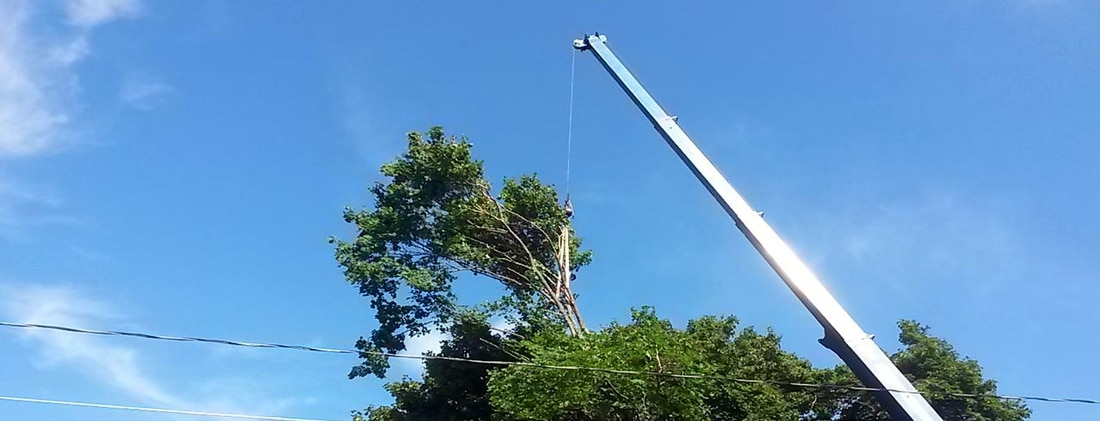Tree Trimming Service In Sussex NJ
