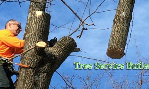 tree removal Butler NJ