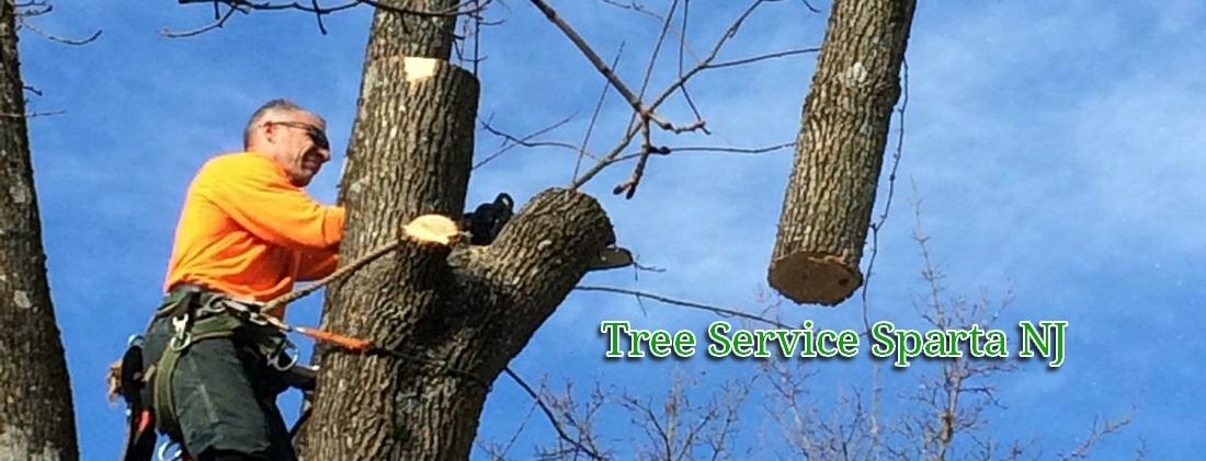 tree service and tree removal pros in Sparta NJ