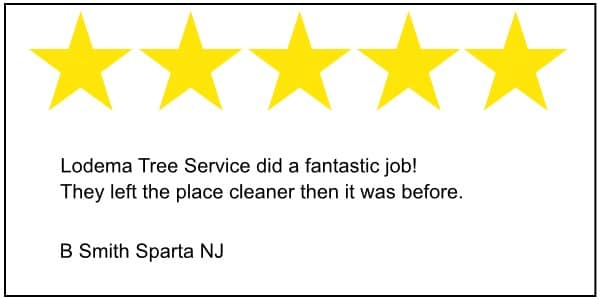 Sparta tree service 5 star review