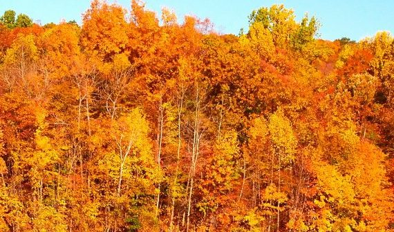 New Jersey fall tree service tips